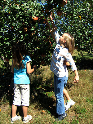 pick your own apples and peaches at Livesay Orchards Farm Market, Porter Peaches, and Pumpkin Patch in Porter, Oklahoma.