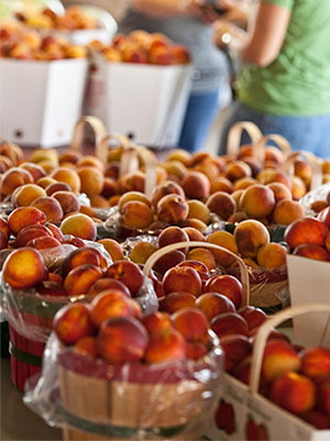 Yellow and White Peaches at Livesay Orchards Farm Market, Porter Peaches, and Pumpkin Patch in Porter, Oklahoma.