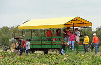 Free wagon ride to the pumpkin patch, locally grown vegetables, and of course, Livesay Orchards Farm Market, Porter Peaches, and Pumpkin Patch in Porter, Oklahoma.